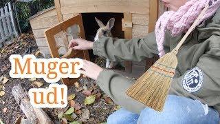Muger ud og fikser løbegården hos kaninerne l Olivias Verden