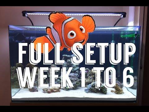 My First Saltwater Aquarium!! Week 1 To Week 6, Live Rocks, Marine Fish