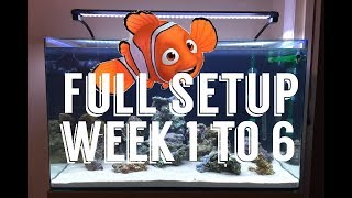 My first saltwater aquarium!! Week 1 to week 6, live rocks, marine fish