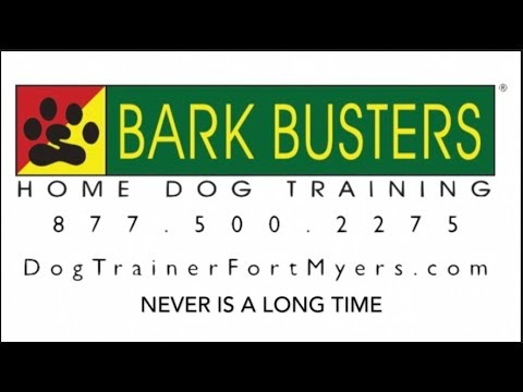 Hound Mix - Stop JUMPING - Dog Training of Fort Myers K9 - Patrick Logue Dog Trainer