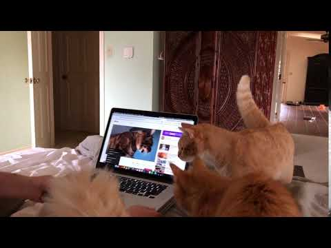 None - Kittens don't like that autotuned video of other cats!