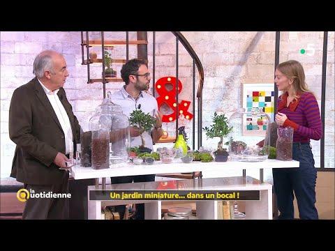 Un jardin miniature... dans un bocal ! - La Quotidienne