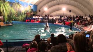 Дельфинарий РИО(Московский дельфинарий у РИО в СПб 28.12.2013., 2014-01-02T22:06:51.000Z)