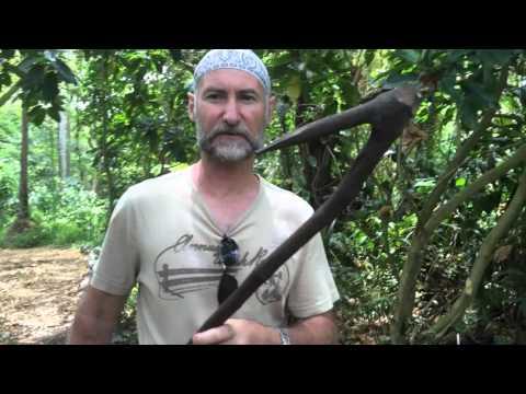 Gardening tips in Espiritu Santo Vanuatu