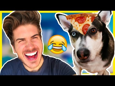 Download Youtube: WHY DO MY DOGS HATE ME!?
