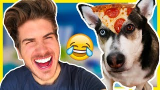 WHY MY DOGS HATE ME!?