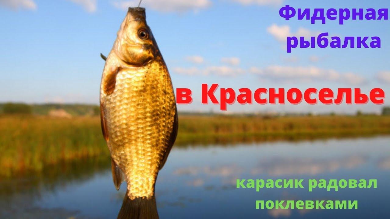 Фідерна рибалка в селі Красносілля. Дуель між мною і Дімою