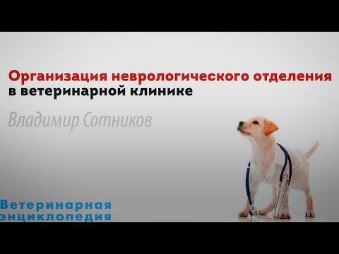Организация неврологического отделения в ветеринарной клинике