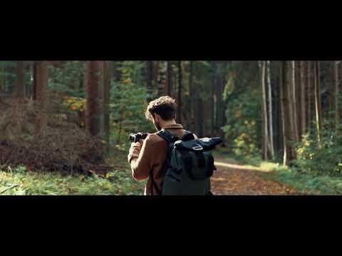 Cinematic Walk In The Woods.