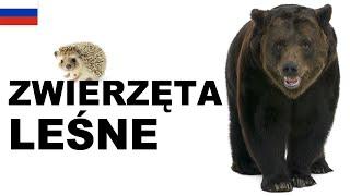 Yрок польского языка - Лесные животные (Zwierzęta leśne)