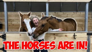 LETTING THE HORSES PICK THEIR STALLS! | BUILDING MY DREAM HORSE BARN PART 20!