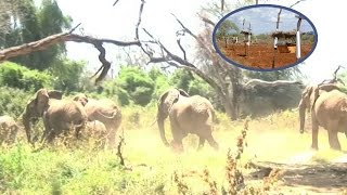 Giant Elephants Scared Of Tiny Bees | Funny