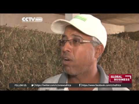 W. Sahara farmers create cheaper, organic animal feed