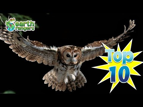 Top Ten Things Owls give a Hoot About
