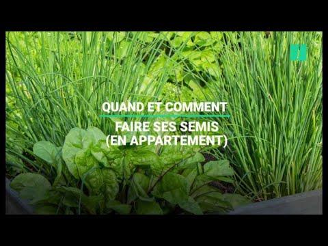 5 plantes aromatiques aux vertus médicinales à faire pousser chez soi