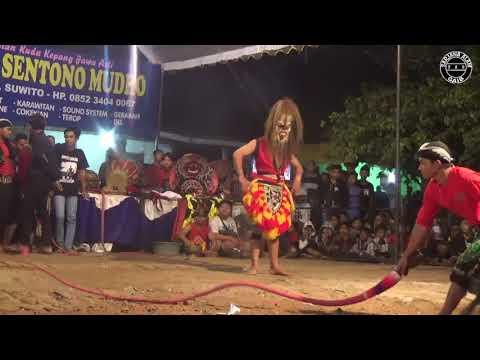 Ganongan Singo Sentono Mudho Feat Cicilalang Lucu Polllll Live Mojorayung