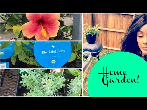 NORTH TEXAS GARDENING   CONTAINER GARDENING FOR BEGINNERS