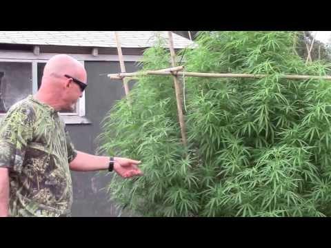 Bigley Ranches Medical Cannabis Garden Tour 2013