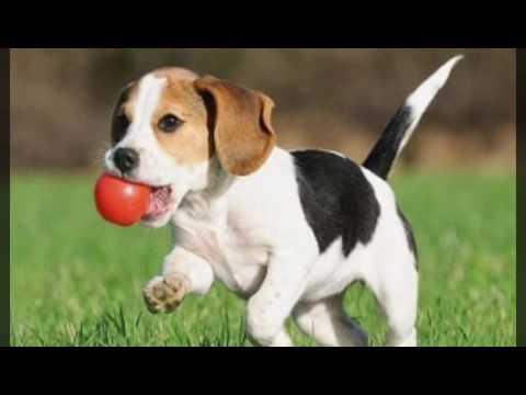 صور حيوانات - YouTube