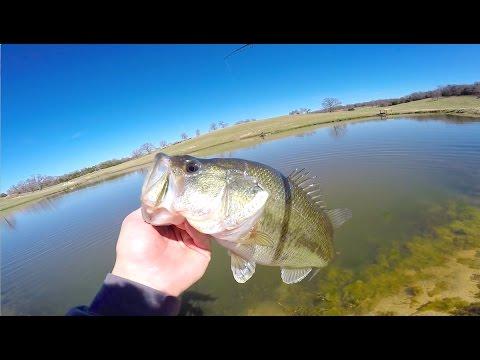 Pond Hopping At Gary Yamamoto's Fishing Ranch