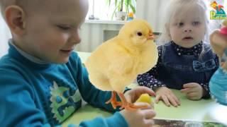 Домашние животные для детей. На ферме. Песенка - мультик про голоса животных. Кто как говорит?