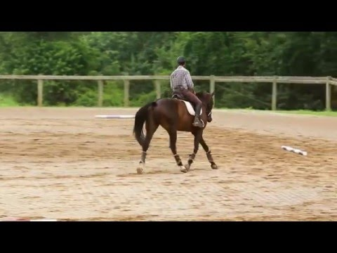 How to Ride a Perfect 20 m circle!
