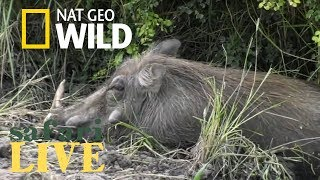 Safari Live - Day 122 | Nat Geo Wild