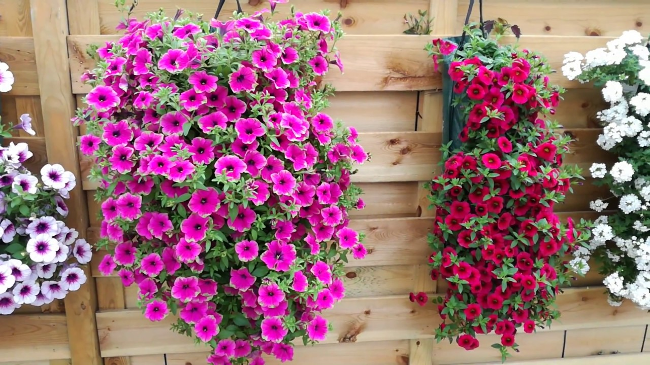 Mur végétal - Jardin Express - YouTube