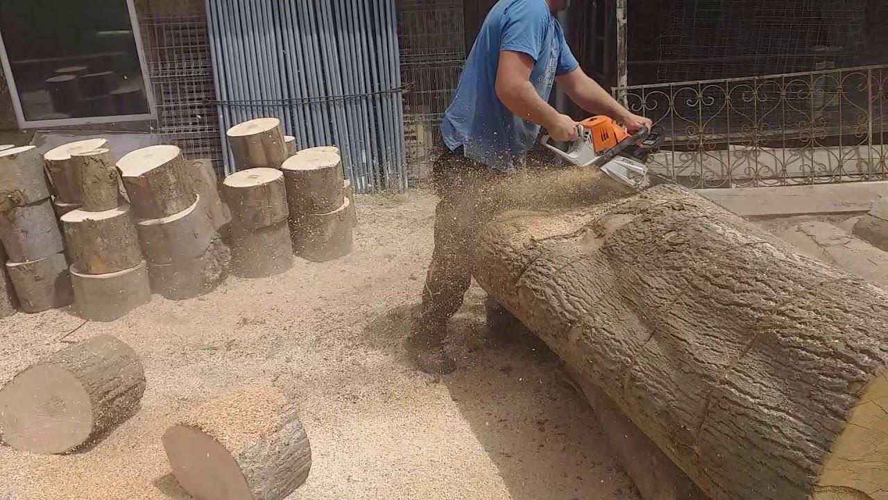 Ms 500i in dry ash log