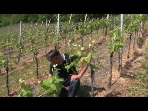 Suisse - pays du vin