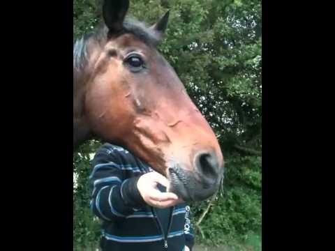 Talking horse 2