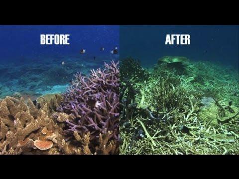 The Dead Great Barrier Reef