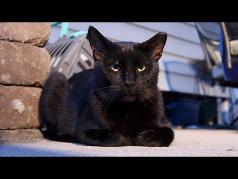 Boo Day 47 - Morning Drama, Stella Hissed - Training And Socializing A Feral Cat