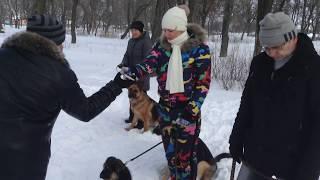Дрессировка собак команда фас. Обучение командам Фас и Чужой. Лабрадор ретривер Оскар