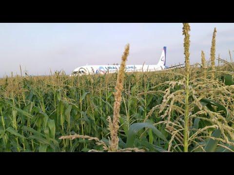 Жесткая посадка в Жуковском Airbus A321. В Москве появились пятикилограммовые чайки?