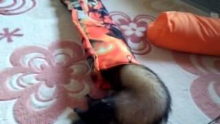 遊んでる動画です。 銀ちゃんが一番楽しそう(笑) http://pet-smile.net/...