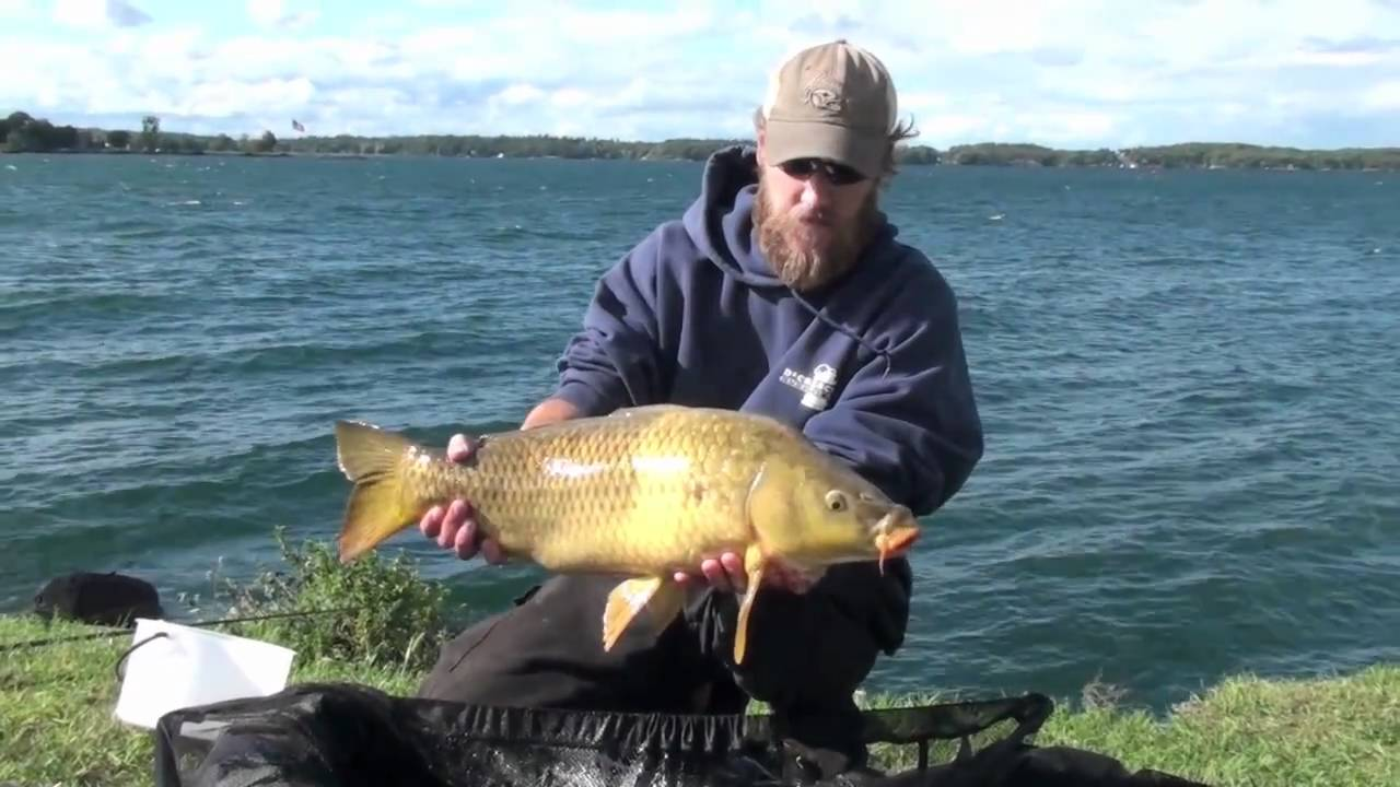 Carp fishing on the st lawrence part 3 youtube for Ct fishing license online