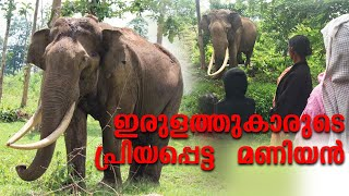 Friendly wild elephant Maniyan Irulam