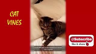New Cat Compilation 2020 # 8 | Cat Vines
