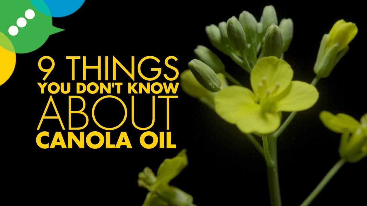 Important facts to know about canola oil Important facts to know about canola oil new images