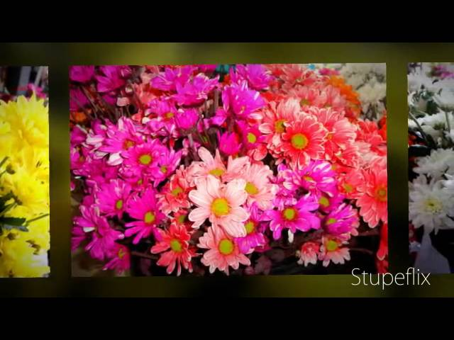 My Stupeflix Video---Maricon Miguel Travel Video