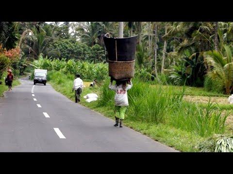 Rice farming in Indonesia (Bali)