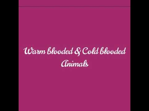Warm Blooded Animals And Cold Blooded Animals | Example Also | For Beginners
