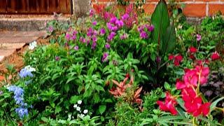 8 Plantas Floríferas Para Canteiro Em Local Ensolarado
