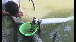Believe This Fishing? Unique Fish Trapping System | New Technique Of Catching Village Fish