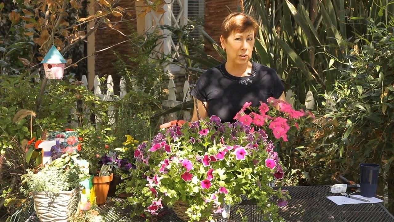 How To Pot A Wave Petunia Garden Space Youtube