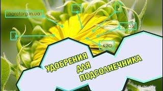 Подкормка подсолнечника микроудобрениями. Бор для подсолнечника, Нертус Фотосинтез, ПлантаПег, Кафос