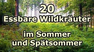 Essbare Wildkräuter (Teil 4): Wildpflanzen im Sommer und Spätsommer