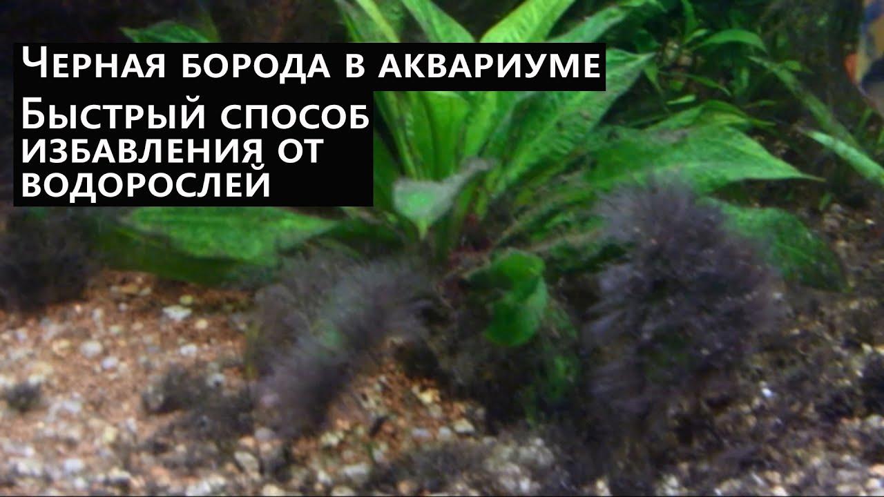 Аквариум mp3 Альбомы Фотографии Дискография Музыка