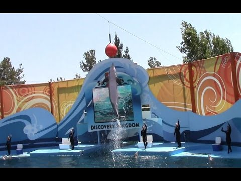 Drench! Dolphin Show at Six Flags Discovery Kingdom (5/10/15)